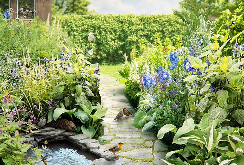 Biodiversiteit in de tuin