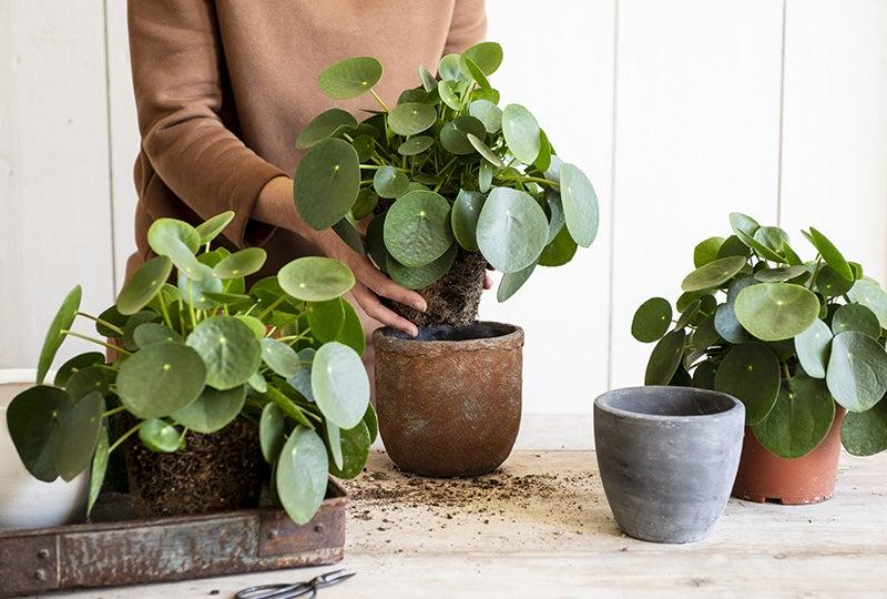 Blog Bloempotten en plantenbakken vullen