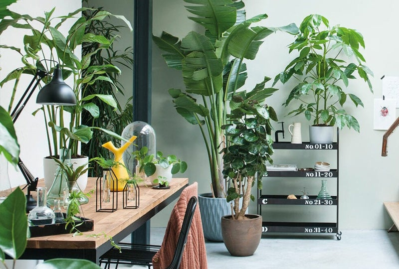 Blog: Top 10 grote kamerplanten