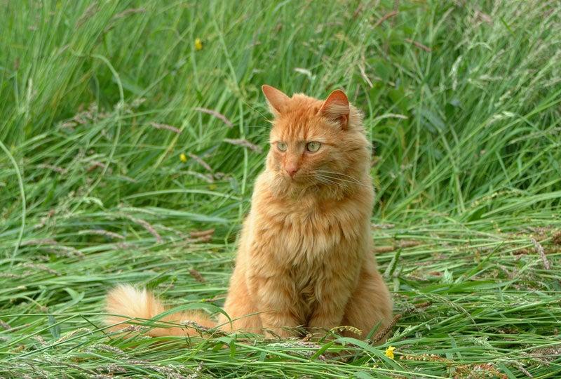 Blog Waarom kattengras?