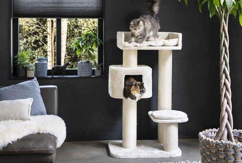 Blog: Spelen met je kat