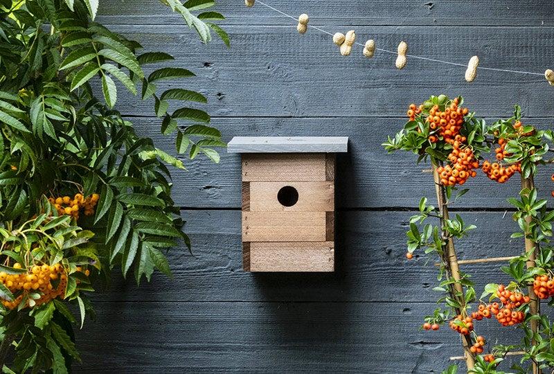 Blog: Vogelhuisje of nestkastje in de tuin