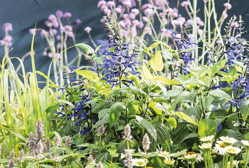 Quiz Hoe biodivers is jouw tuin
