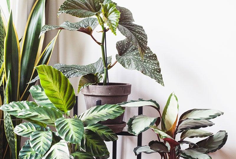 Blog: Waar op letten bij een nieuwe plant?