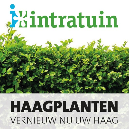 Haagplanten, vernieuw nu de haag