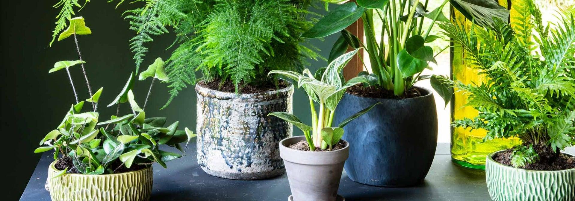Welke kamerplant past bij jou