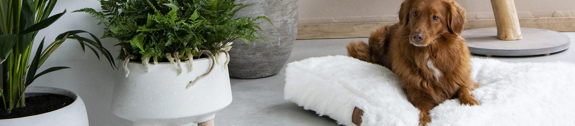 Hondenmand of hondenkussen kiezen voor je hond