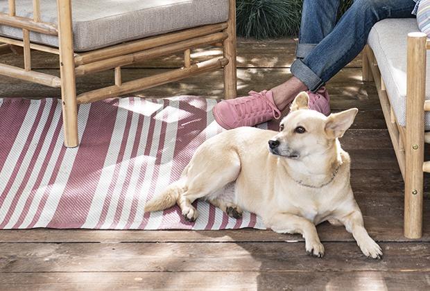Hond bij warm weer