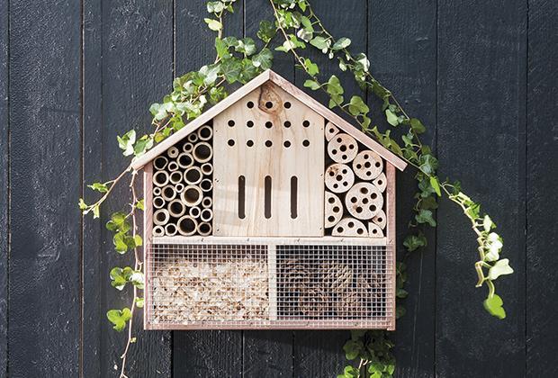Insectenhotels en bijenhotels: alles wat je moet weten