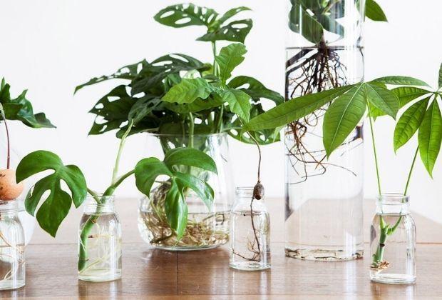 Hydroponie: Je plant op water in een glazen pot
