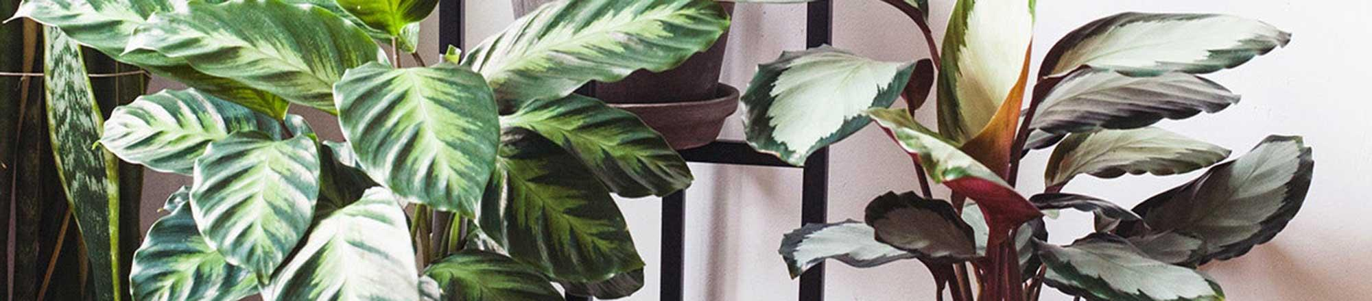 Waar moet je op letten als je een nieuwe plant koopt?