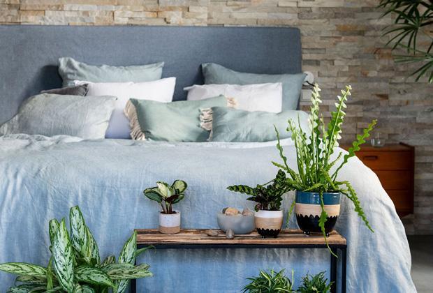 Kamerplanten voor in de slaapkamer