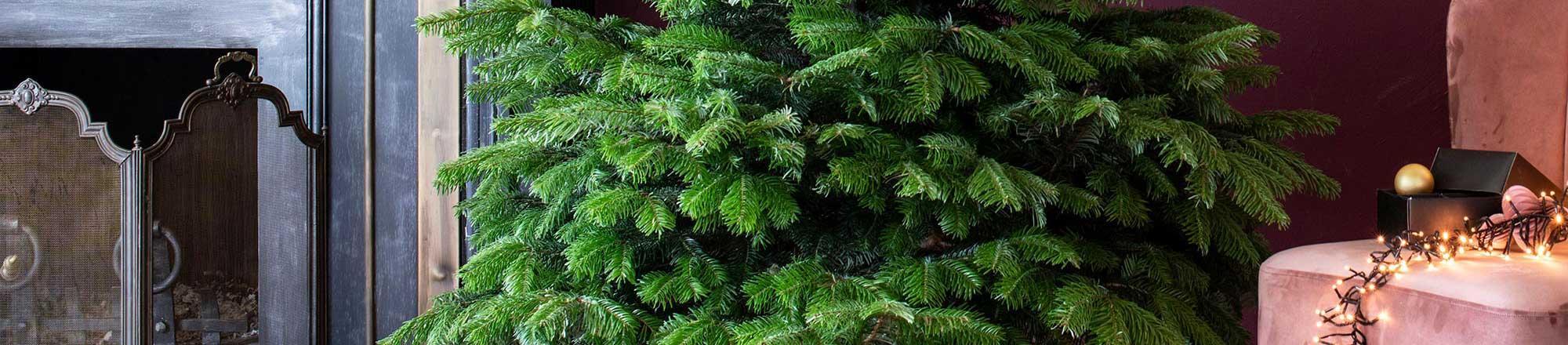 Kerstboom verzorgen