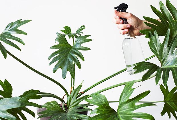 Luchtvochtigheid voor je kamerplanten