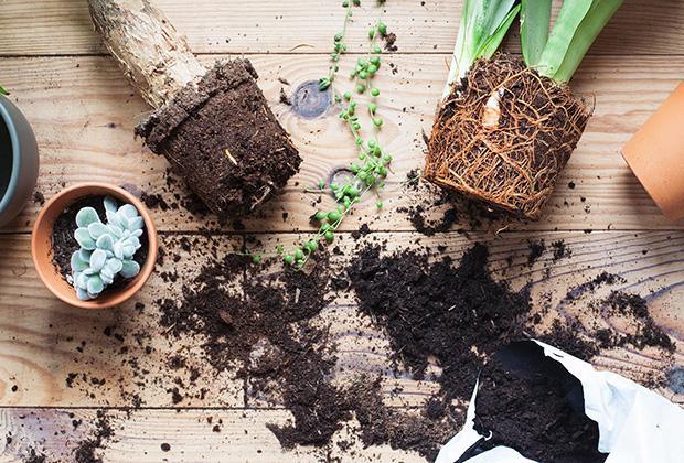 Hoe verpot je kamerplanten