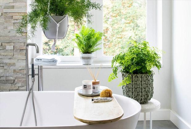 Kamerplanten voor in de badkamer