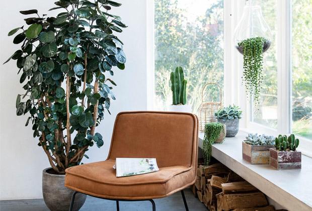 Kamerplanten voor in de vensterbank