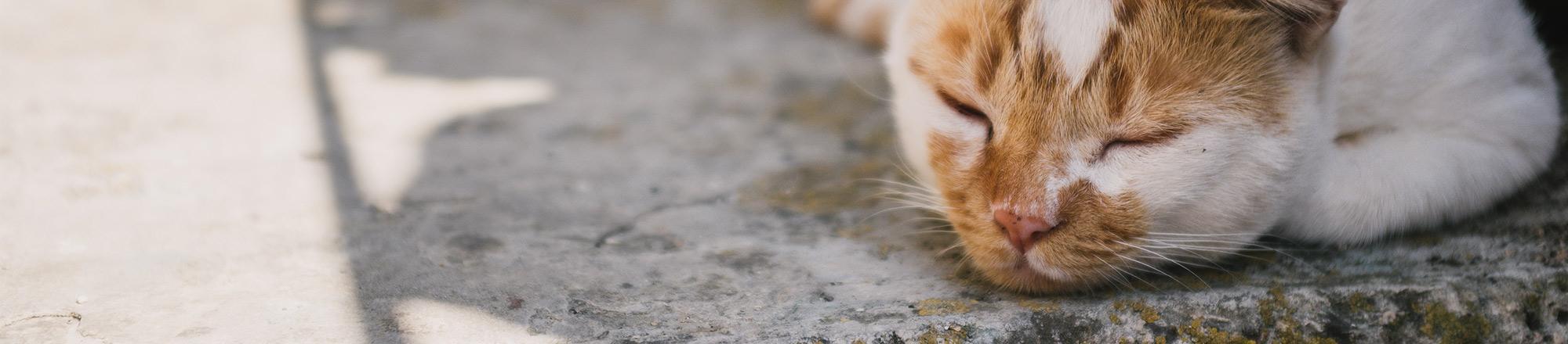 Kat bij warm weer
