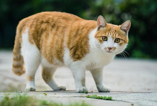 10 Tips om katten uit de tuin te weren