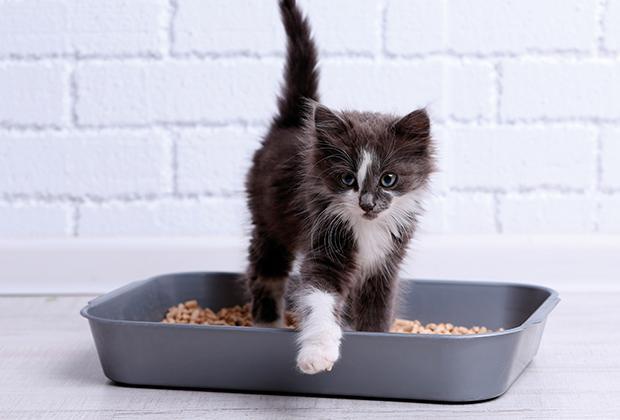 Kattenbak en kattenbakvulling kiezen voor je kat