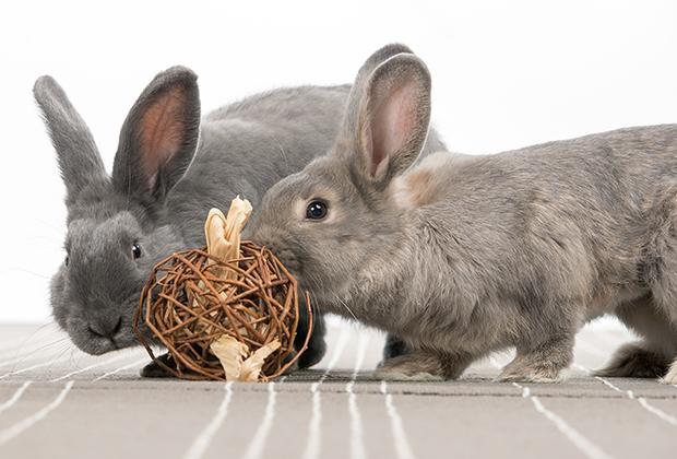 Intelligentiespellen voor konijnen