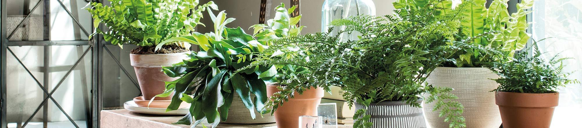 Wat zijn luchtzuiverende planten?