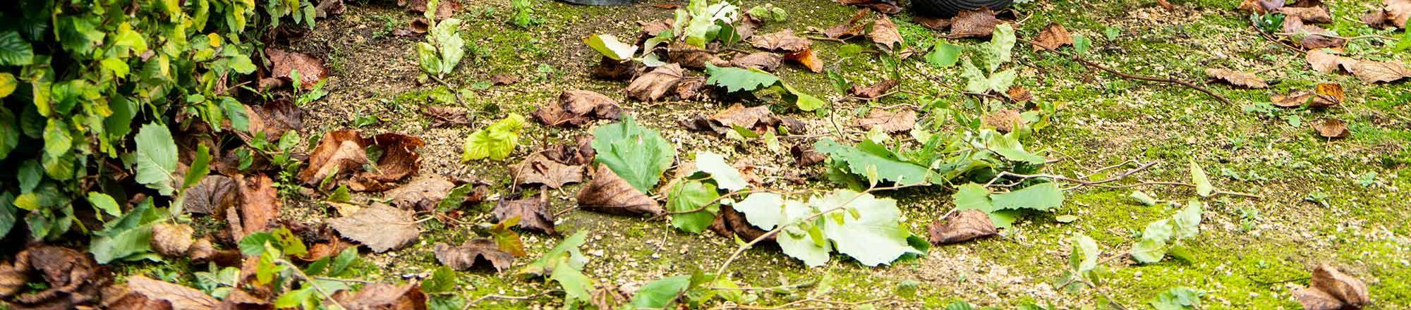 Mulch: Waarom een mulchlaag en zelf mulchen