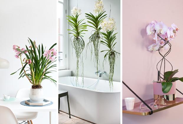 Welke orchidee past in jouw interieur?