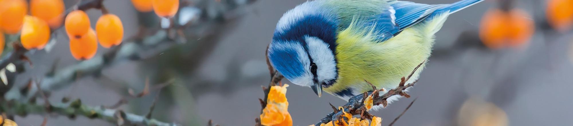 Tips voor meer vogels in je tuin