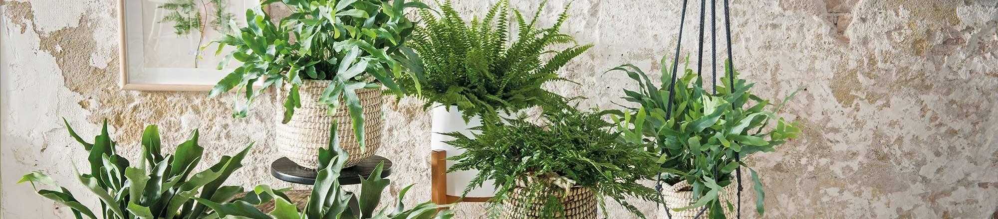 Plantensoorten uitgelegd