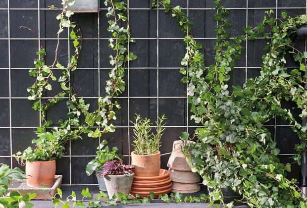 Tips voor het bevestigen van klimplanten