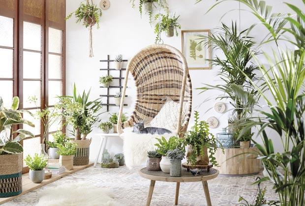 Top 10 luchtzuiverende planten