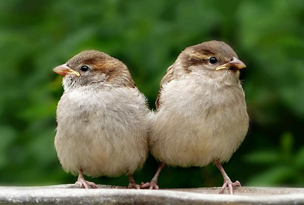 Wat moet je doen als je een jonge vogel vindt?