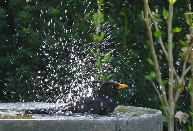 Help vogels de hitte door. Hitteplan voor vogels