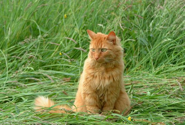 Waarom je kat kattengras nodig heeft