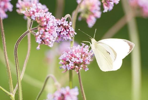 5 Tips om de biodiversiteit in je tuin te vergroten