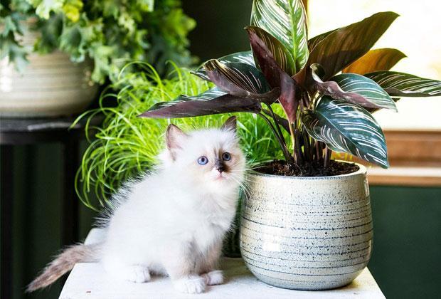 Zo leven je kamerplanten en huisdieren succesvol samen