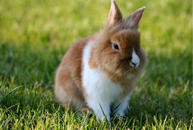 De 10 belangrijkste tips bij het aanschaffen van een konijn