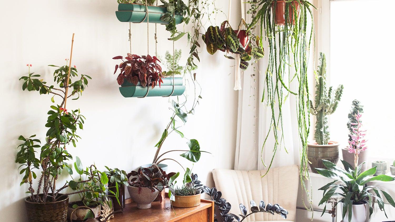 Zo verzorg je je planten in de zomer