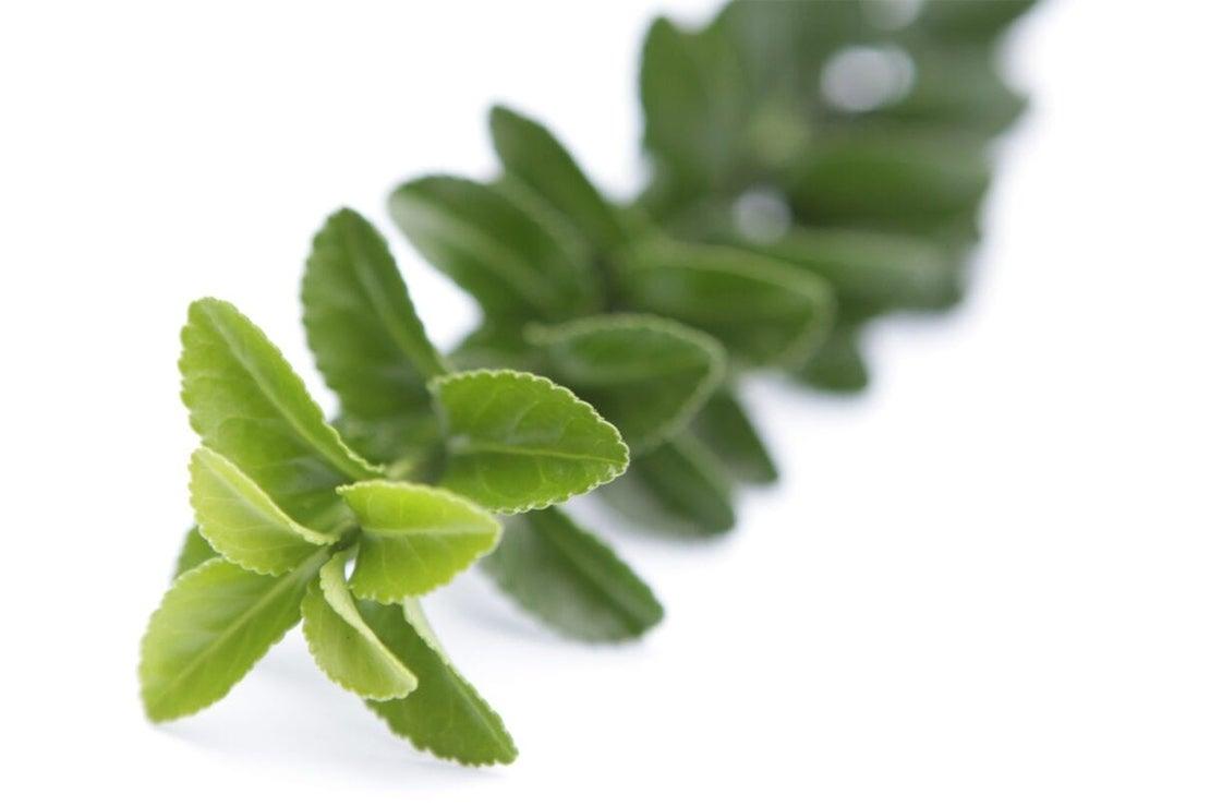 Kardinaalsmuts (Euonymus japonica 'Green Spire')