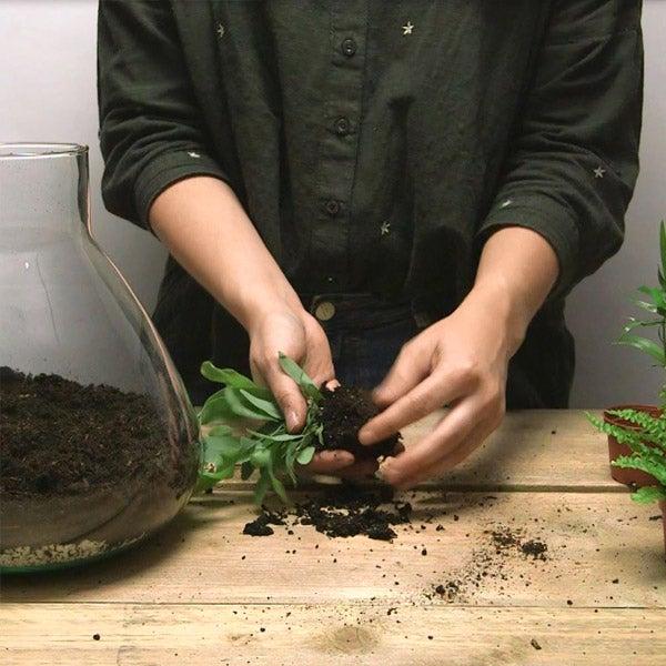 DIY planten terrarium Stap 3: Plantjes voorbereiden voor in terrarium