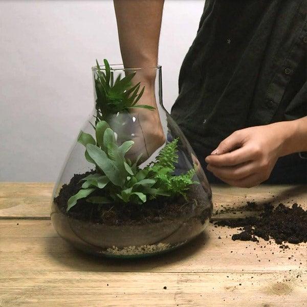 DIY planten terrarium Stap 4: Plantjes plaatsen in terrarium