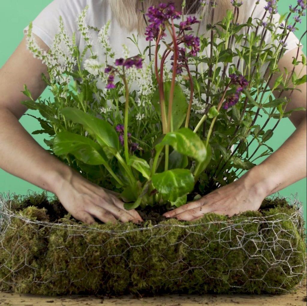 DIY Wilde veldtuin stap 5: Vul met planten
