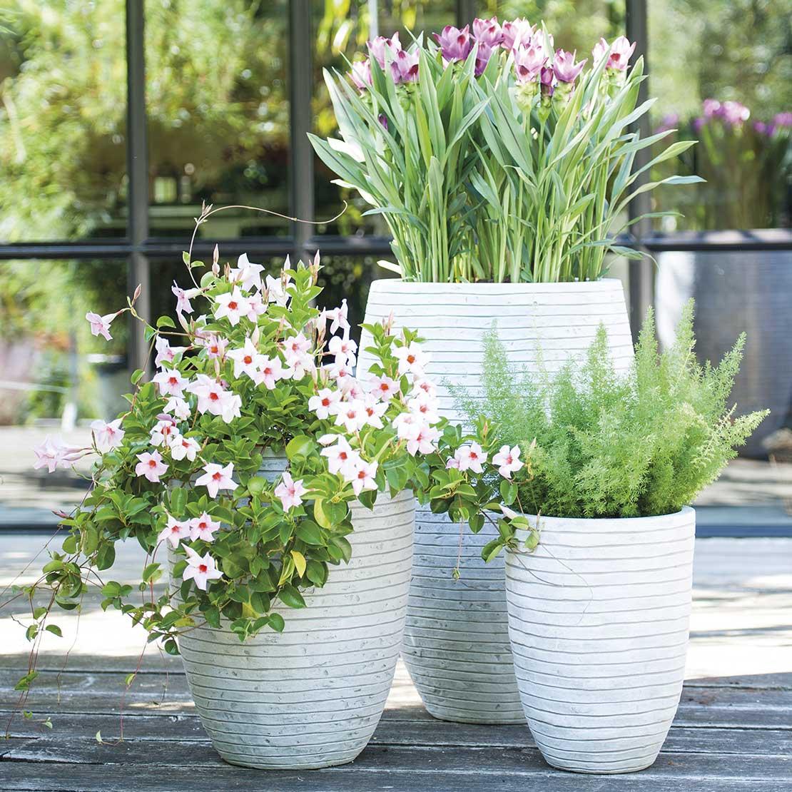Buitenpotten met planten