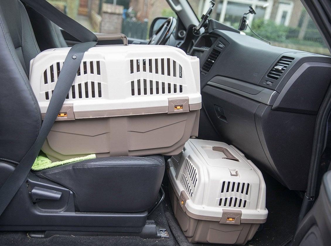 Kattenreismanden in de auto