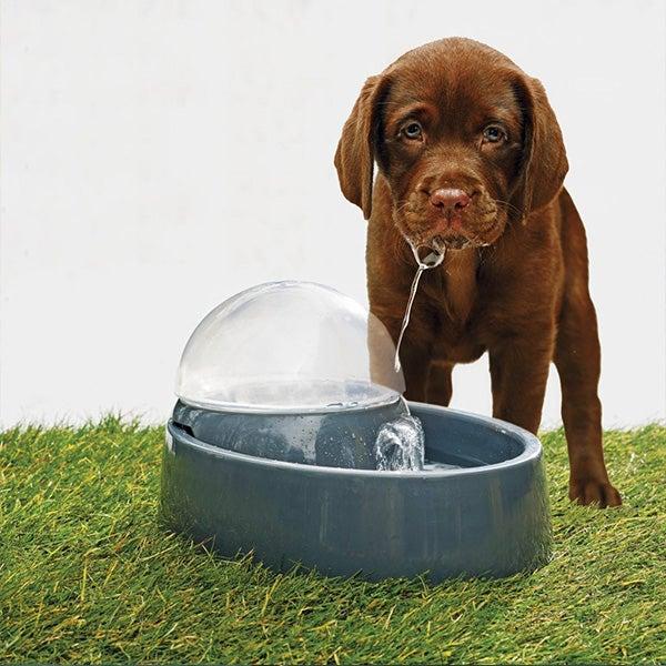 Hond drinkt uit drinkfontein