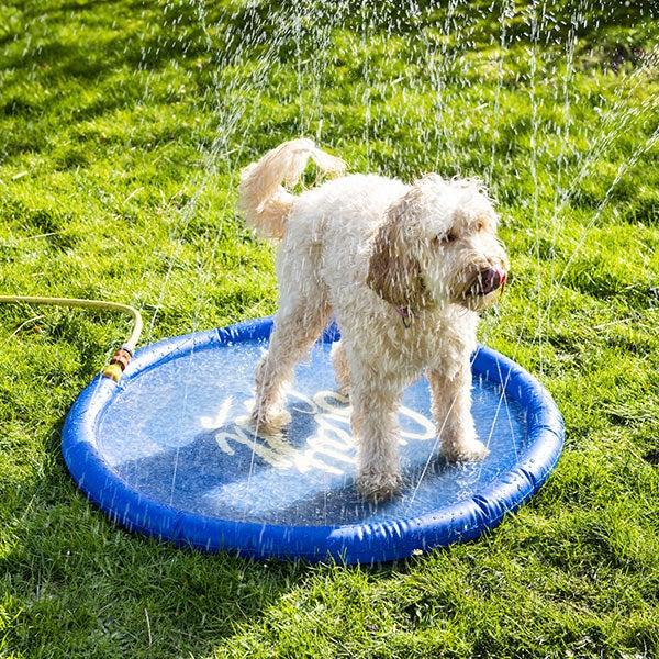 Hond op koelmat met sproeiers