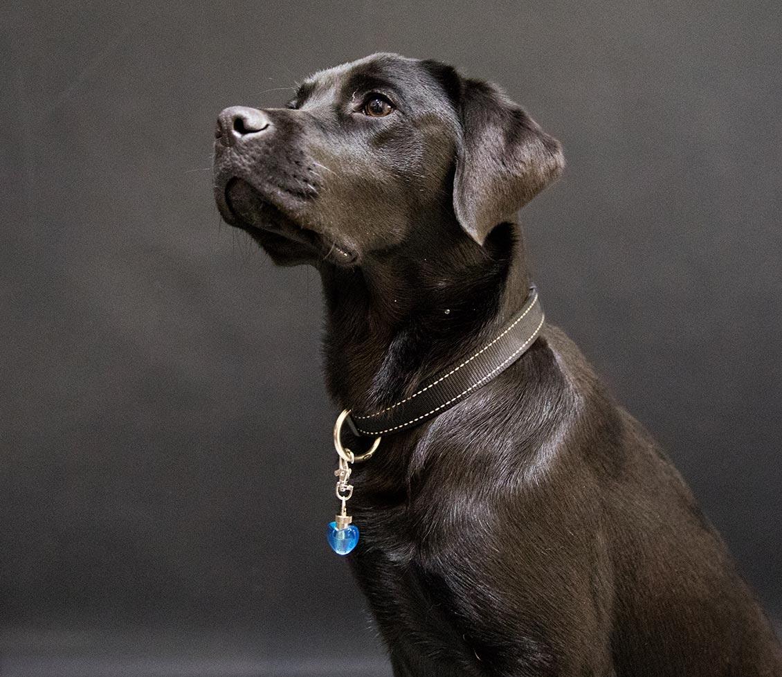 Hond met halsbandhanger met LED lampje
