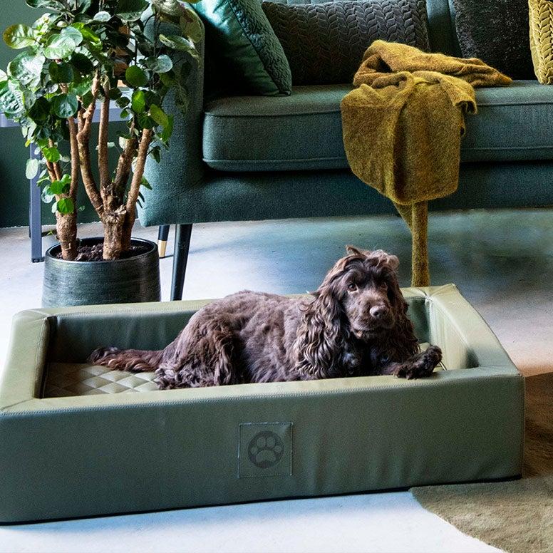 Hond in orthopedische hondenmand