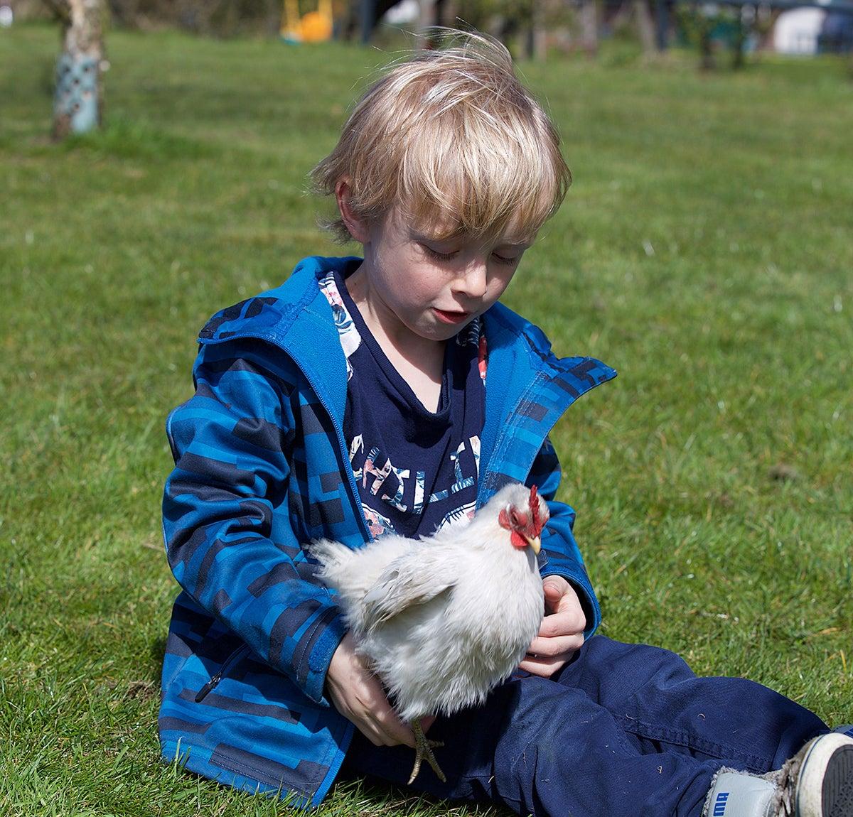 Knuffelen met een kip